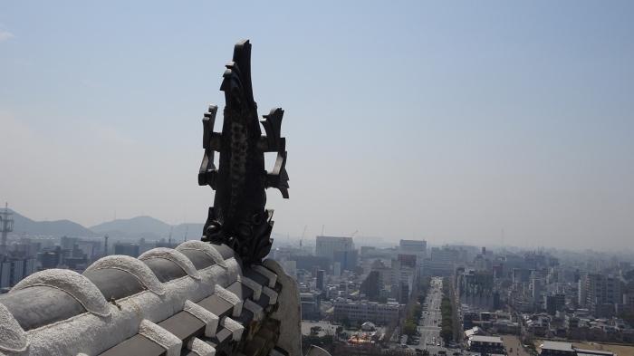 姫路城と桜 (6)