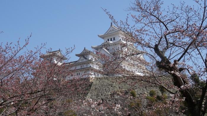 姫路城と桜 (11)