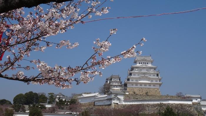 姫路城と桜 (12)