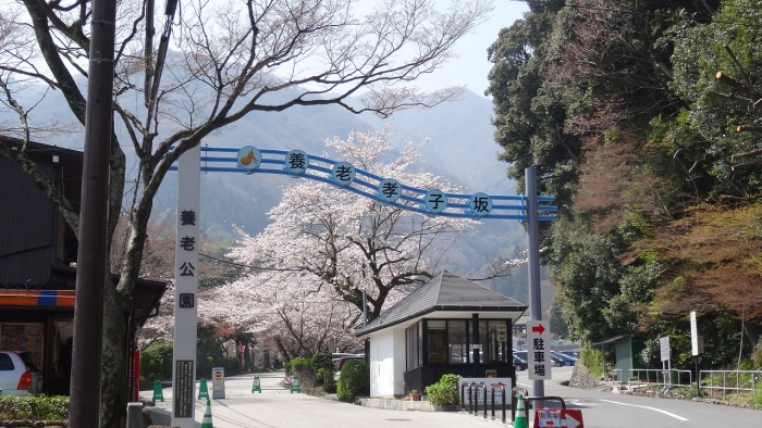 姫路城と桜 (15)