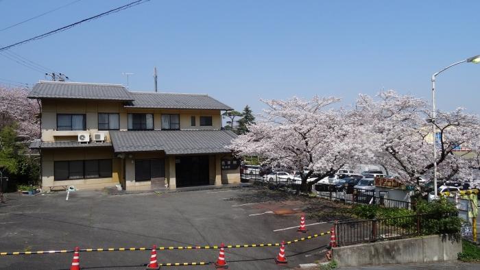 姫路城と桜 (17)