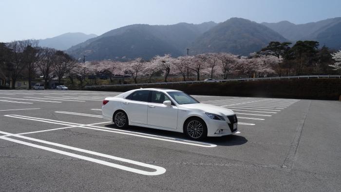 姫路城と桜 (18)