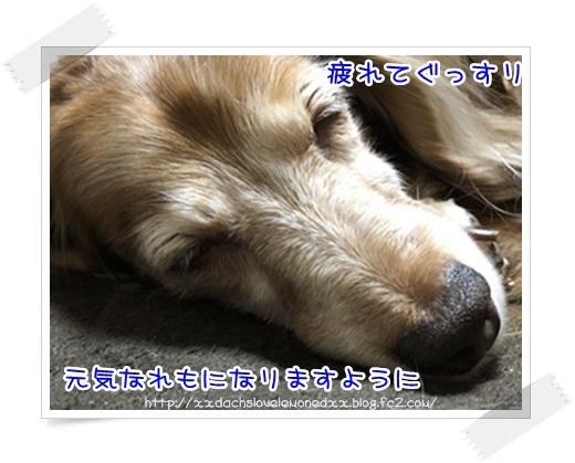 IMG_1237.jpg