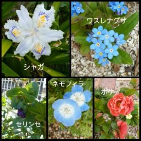 PhotoGrid_1522752891113.jpg