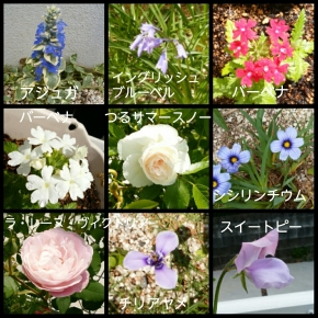 PhotoGrid_1525083519736.jpg