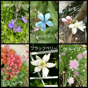 PhotoGrid_1526332164859.jpg