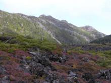 北八ヶ岳ペンション山の朝通信