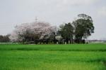星宮神社 (栃木県下都賀郡野木町