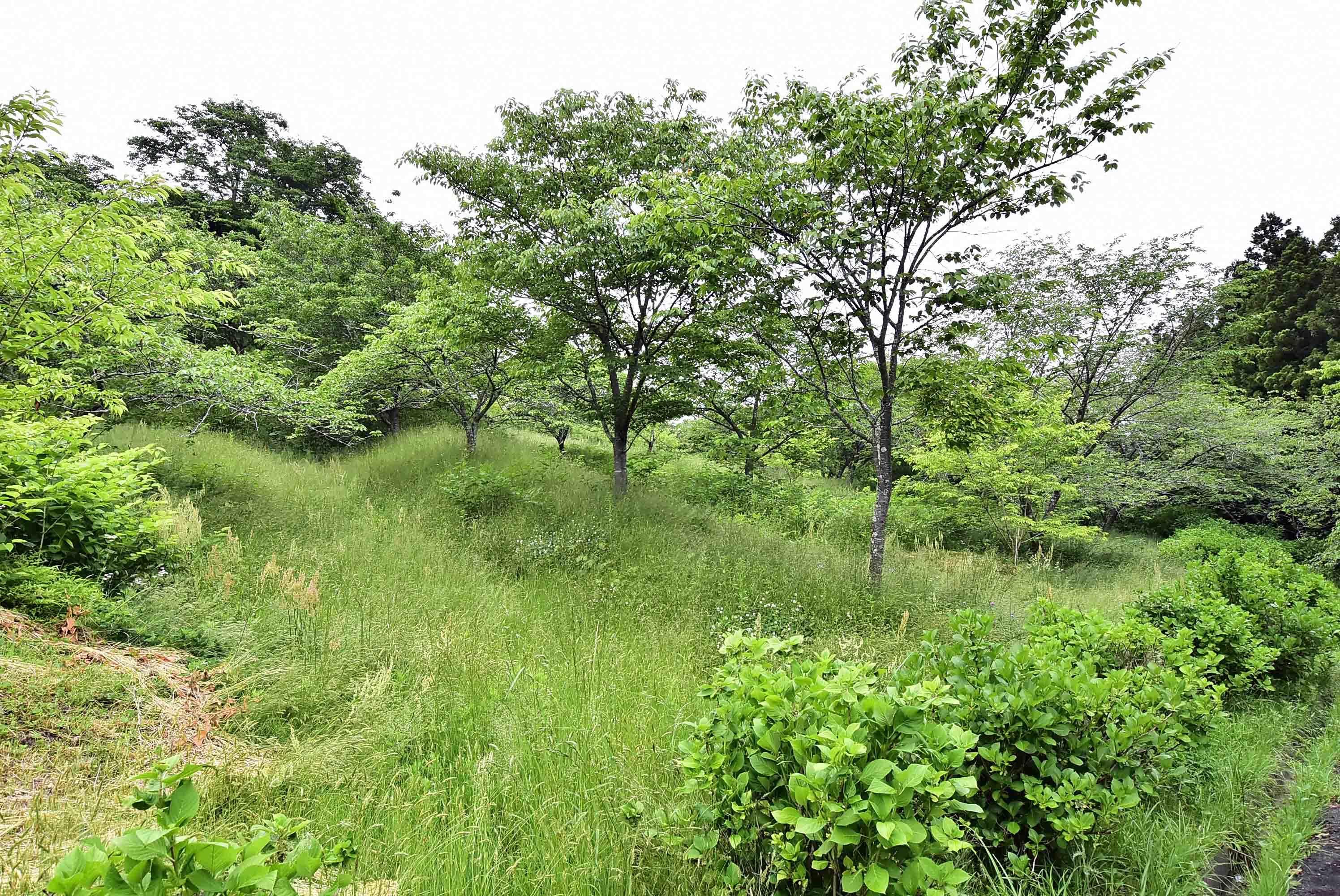 鶴丸城 畝状竪堀