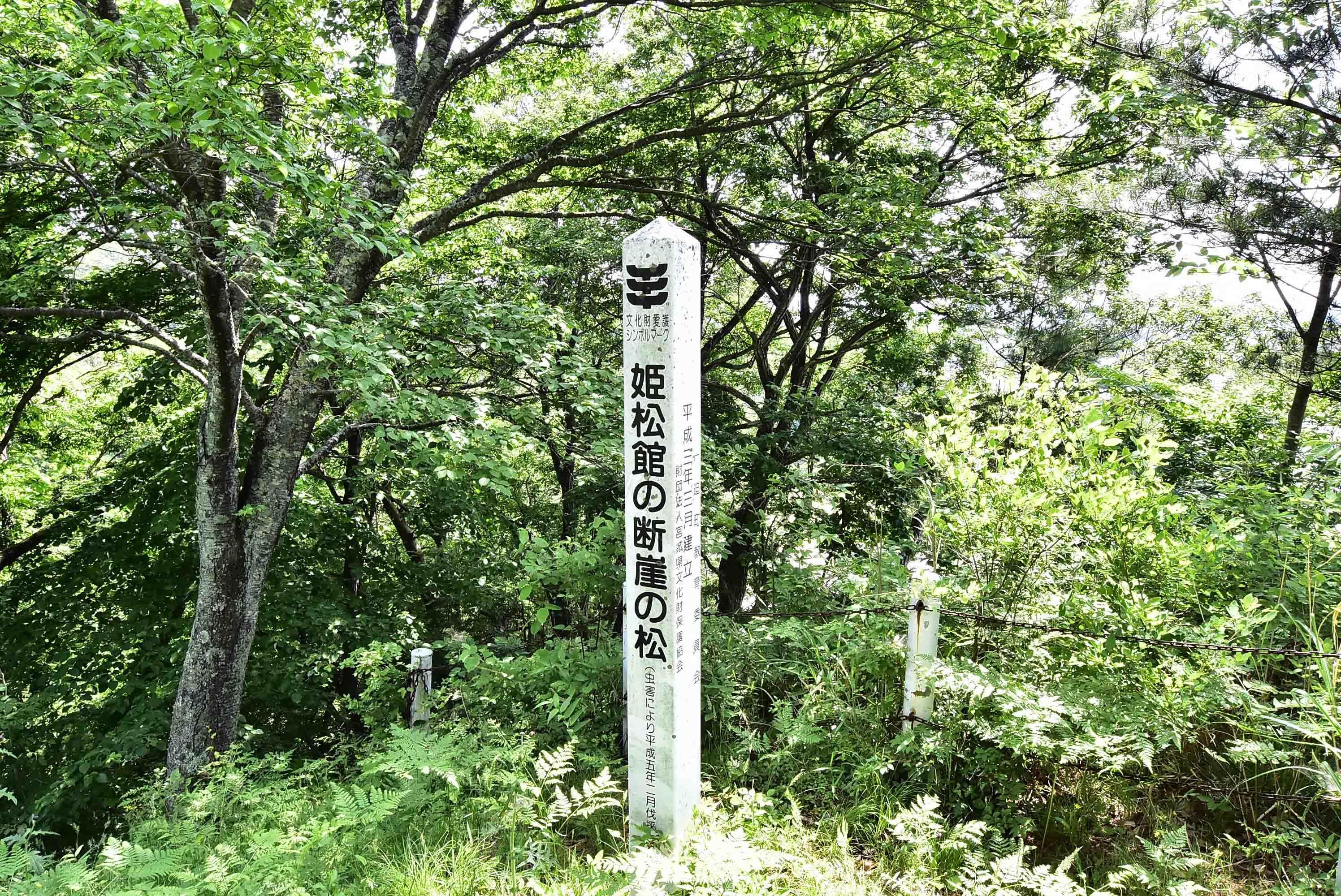 姫松館の断崖松
