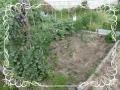 茄子、ジャガイモの畑