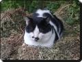遊びに来た猫