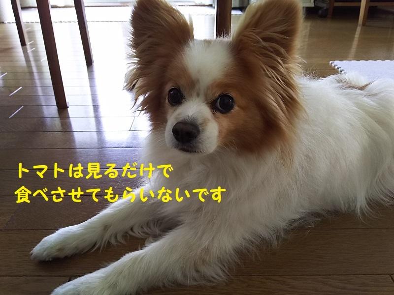 DSC_0441@