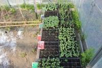 野菜の芽4