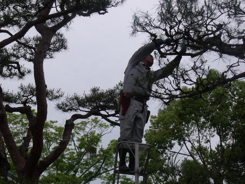 高木の剪定