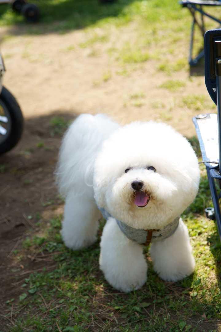 yokohama dog week a7r3 (27)