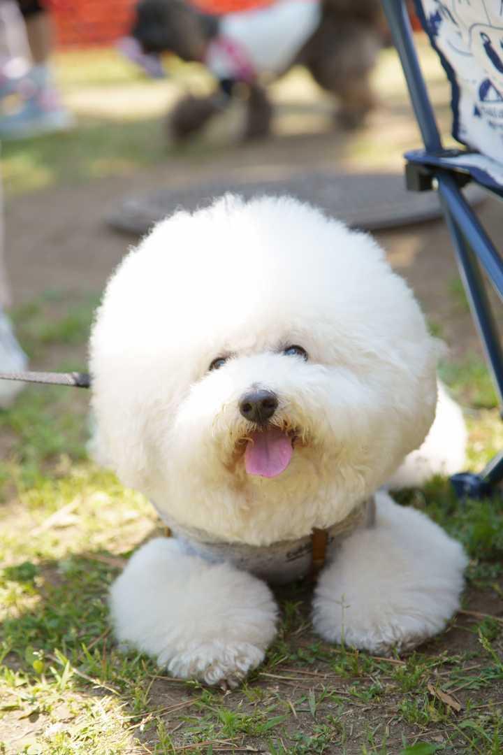 yokohama dog week a7r3 (29)