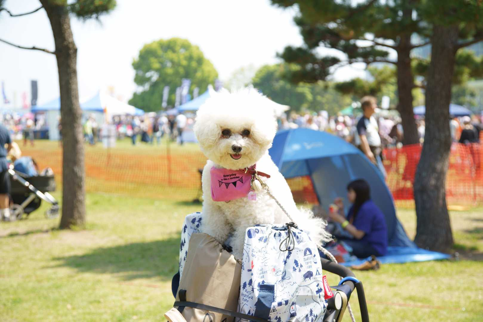 yokohama dog week a7r3 (30)
