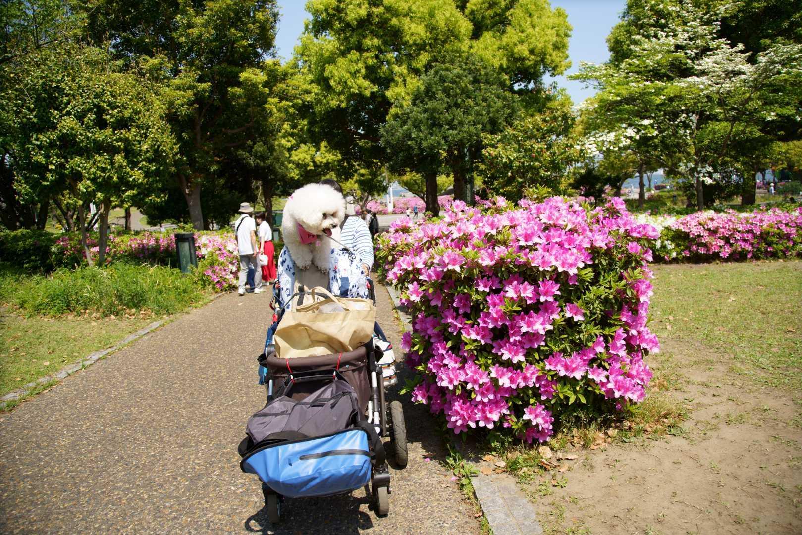 yokohama dog week a7r3 (31)