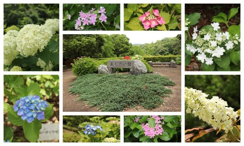 180609紫陽花園