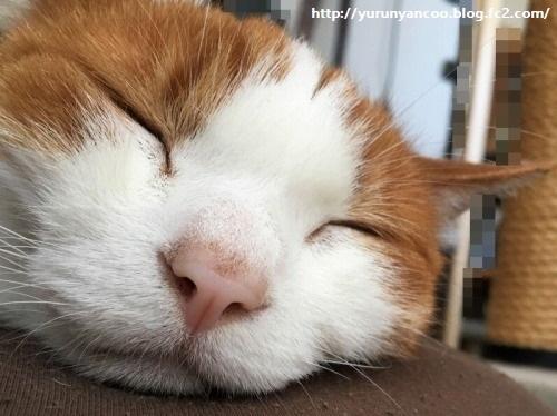 ブログNo.1212(枕の隣の猫)5