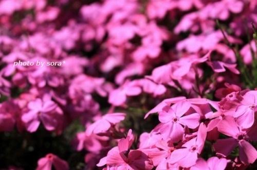 ブログNo.1197(夜中は可愛い)8