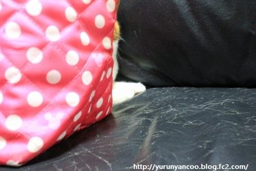 ブログNo.1193(折角隠れたけど。。。)2