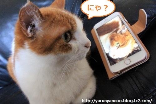 ブログNo.1198(猫のゴロゴロ音♪(動画有り))1