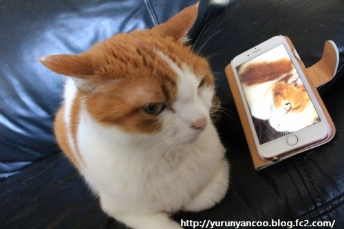 ブログNo.1198(猫のゴロゴロ音♪(動画有り))2