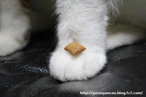 ブログNo.1213(猫のおやつと人間のおやつが似ている)9
