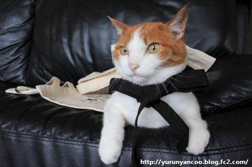 ブログNo.1214(ついつい買ってしまう猫グッズ)11