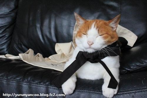 ブログNo.1214(ついつい買ってしまう猫グッズ)12
