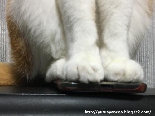 ブログNo.1199(スマホに乗る猫)6