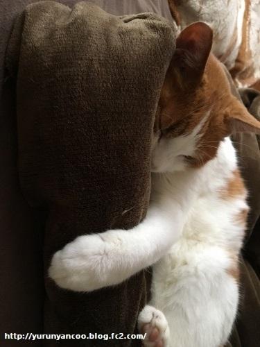 ブログNo.1203(猫も抱き枕を使う?)2