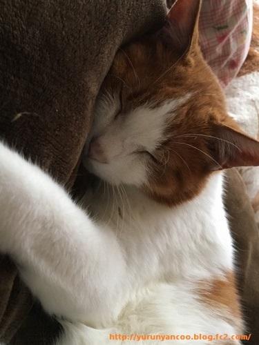 ブログNo.1203(猫も抱き枕を使う?)4