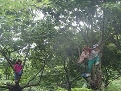 18栗の木