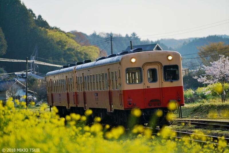0544 昭和レトロ 春の小湊鉄道 (千葉県 市原市)