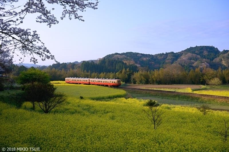 絶景探しの旅 - 0545 菜の花のじゅうたんを走る小湊鉄道(千葉県 市原市)