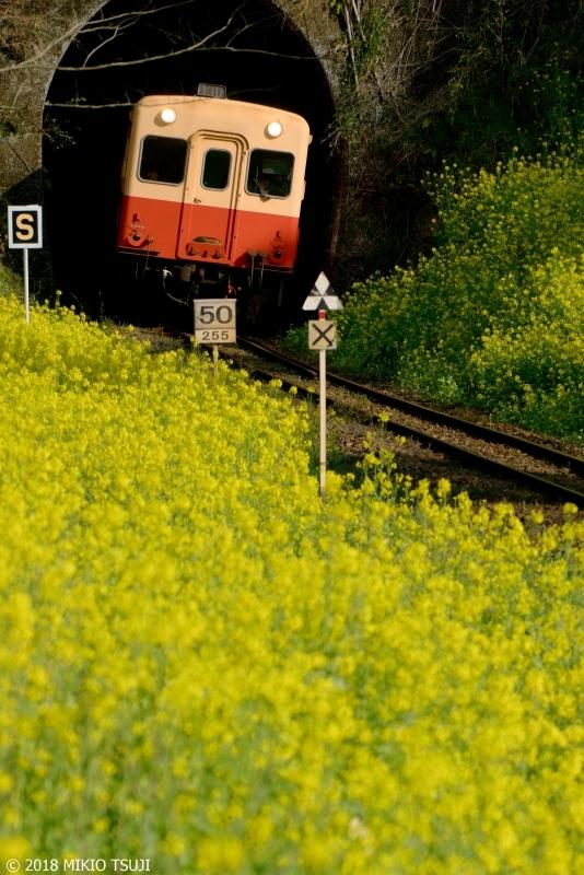 絶景探しの旅 - 0546 トンネルを抜けるとそこは黄色い世界(千葉県 市原市)