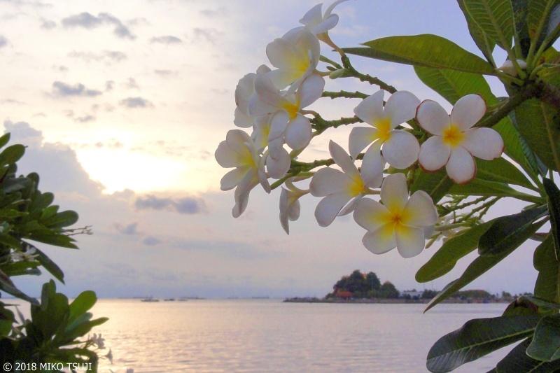 絶景探しの旅 - 0581 プルメリアの夕暮れ (タイ シラチャ)