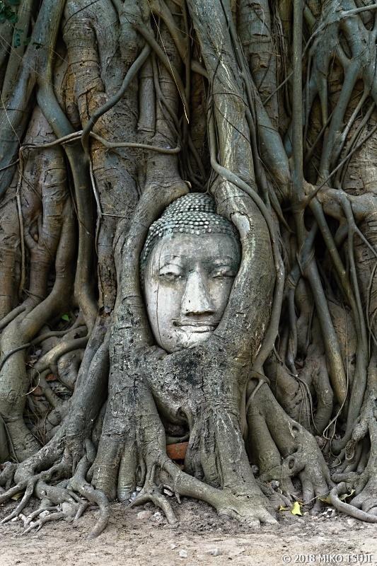 絶景探しの旅 - 0583 廃墟の奇跡の仏頭 (ワット・マハタート/タイ アユタヤ)