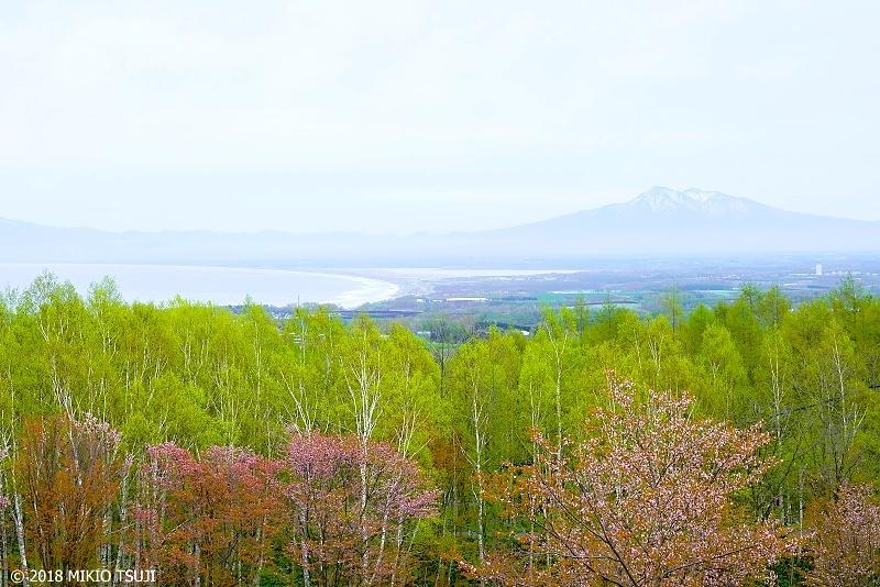 絶景探しの旅 - 0593 霧のかかる斜里岳とオホーツクの桜の風景 (天都山展望台/北海道 網走市)