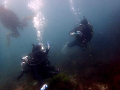 520~OW 水中でも仲良しです