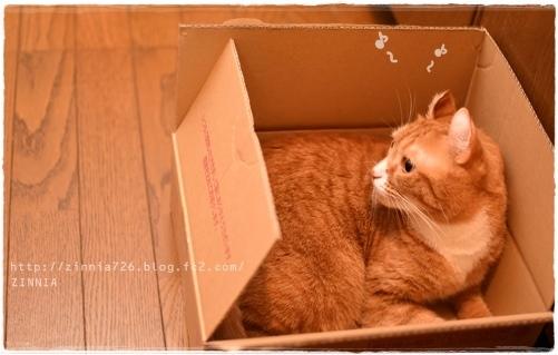 安定の #ダンボール猫1