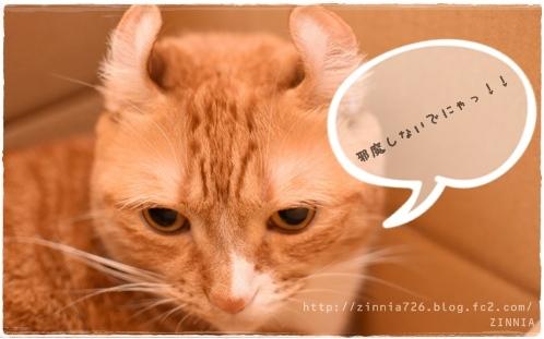 安定の #ダンボール猫2