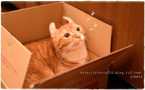 安定の #ダンボール猫